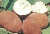 Doce de Cupuaçú
